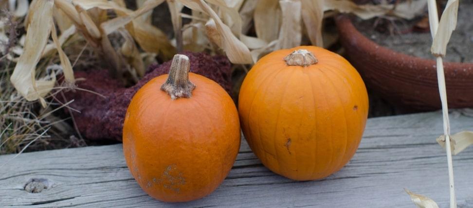 かぼちゃ(2つ)